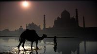 Taj Mahal (7)