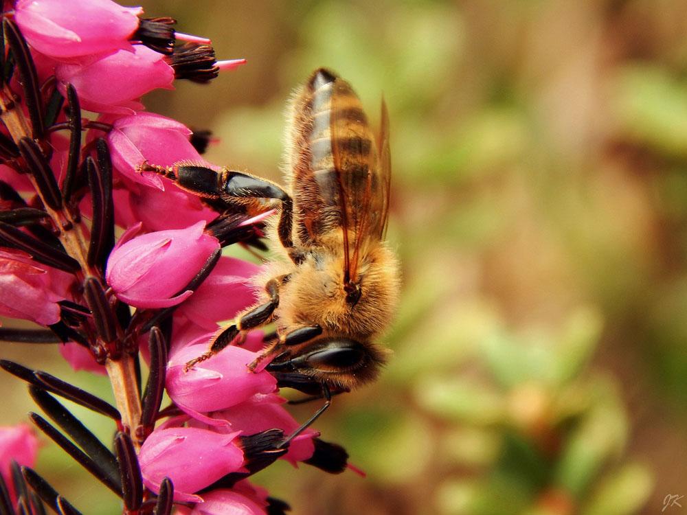 FAQs Santa Barbara Pest Control Services