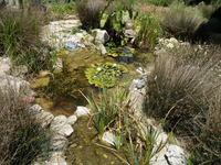 Water Garden Pond Fish