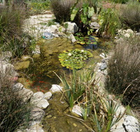 Pond with Fish & Waterfall