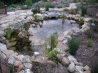 Aquatic Native Plants