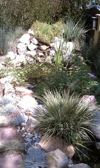 Native Plants Pond