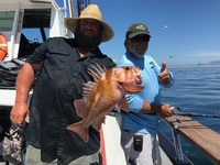 Coral Sea get the Lingcod @SRI
