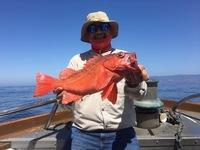Stardust has good Coastal Fishing