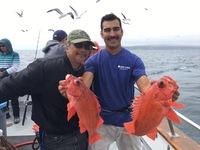 Lingcod & Rockfish Limits!