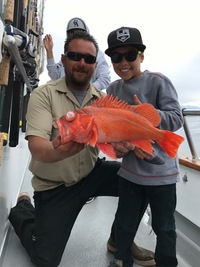 Nice Reds for Stardust Charter