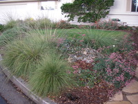Native Plants & Lawn