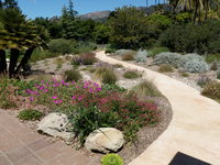 CA Friendly Plantings