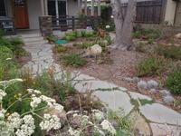 CA Plants & Flagstone Pathway