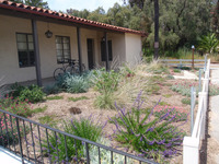 Drought-Tolerant Planting