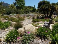 Dry Creek Bioswale