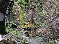 Deer Cage Installed