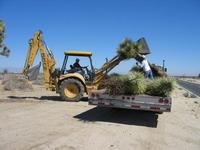 Joshua Tree Relocation
