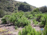 Kay Restoration Post Planting