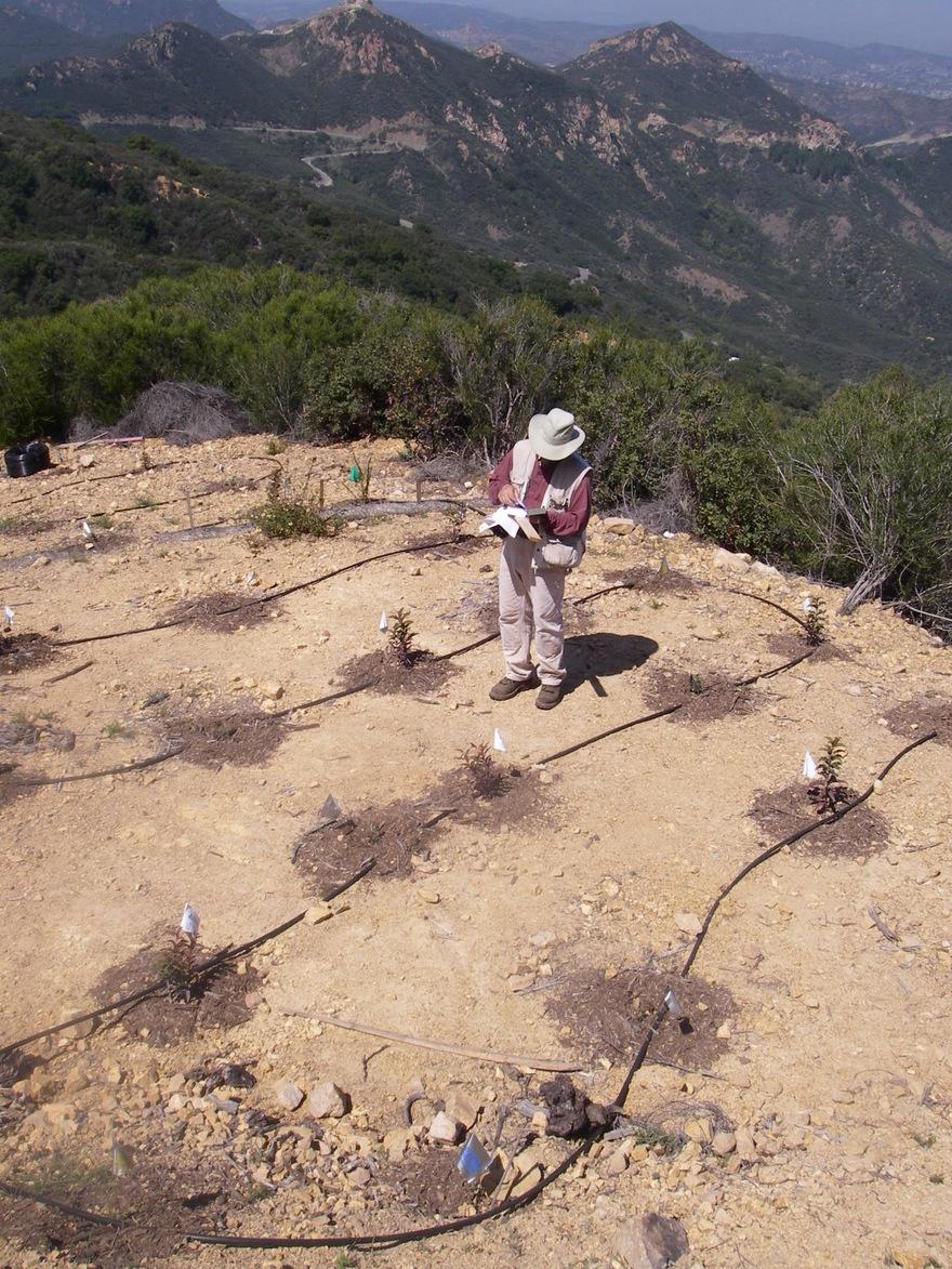 Kay Restoration Planting 2
