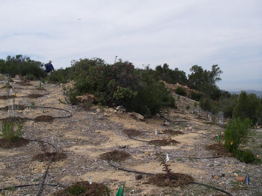 Kay Restoration Planting 4