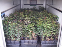Kay Restoration Plants Delivery
