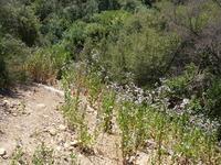 Kay Restoration Post Seeding
