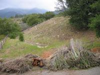Weeding Restoration Areas