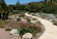 Stamped Concrete Path & Native Plants