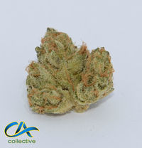 CA Collective Sherbert