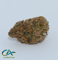 CA Collective Dragonfly Purple