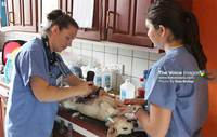 TOCO, HelpAWS and World Vets Conduct Spay and Neuter Clinics