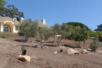 Olive Trees Restoration