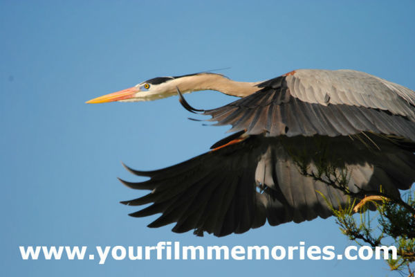 Reel Film Production Coming Soon! Birds