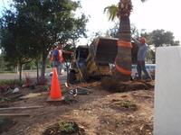 Palm Tree Installations