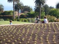 Drough Tolerant Grass