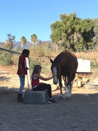 Equine Facilitated Learning (EFL)  February 1, 2018