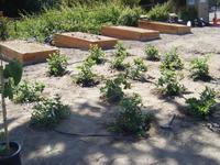 Food Plantings