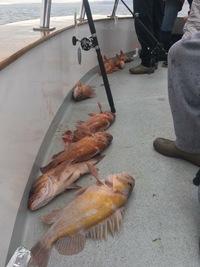 Coral Sea 3/4 day 3.13.18