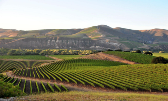Vineyards-laRincan