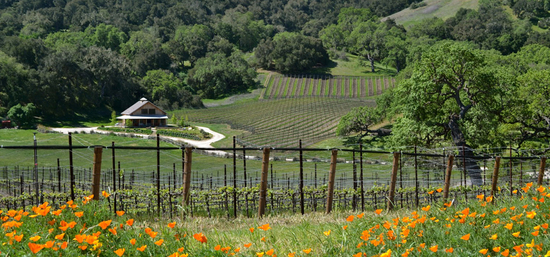 Vineyards - refugio ranch