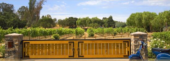 Vineyards - sogno del fiore