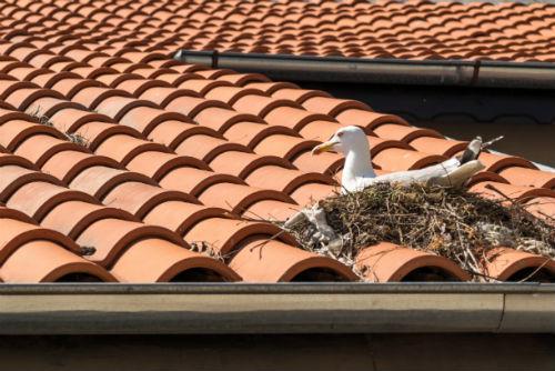 O'Connor Pest Squirrel & Bird Control Santa Barbara