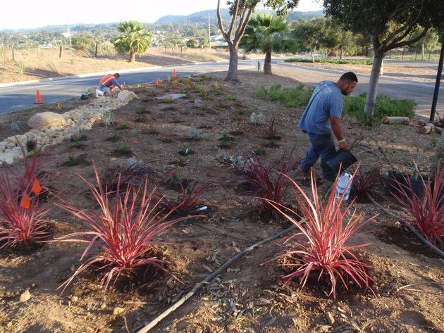 Living Flame Plantings