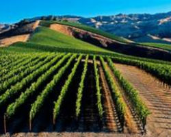 Matilija Pure Water Systems Services Santa Barbara Wineries