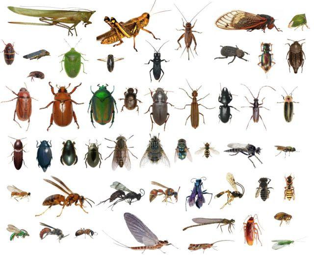 Mosquito, Tick, & Flea Bite Illnesses Increasing