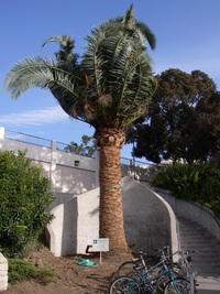 SBCC Palm