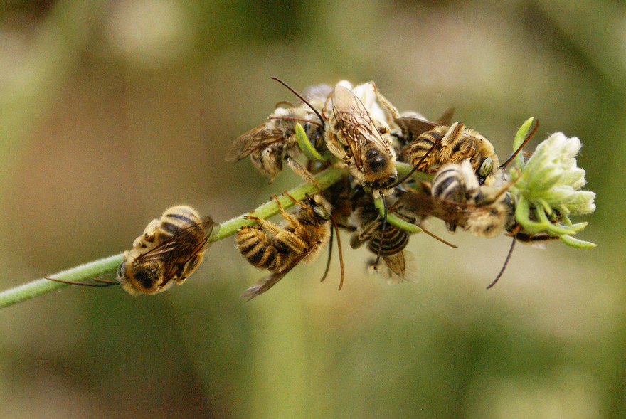 Watsonville Garden Best Pest Control Practices
