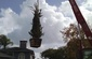 Planting - craning large box trees