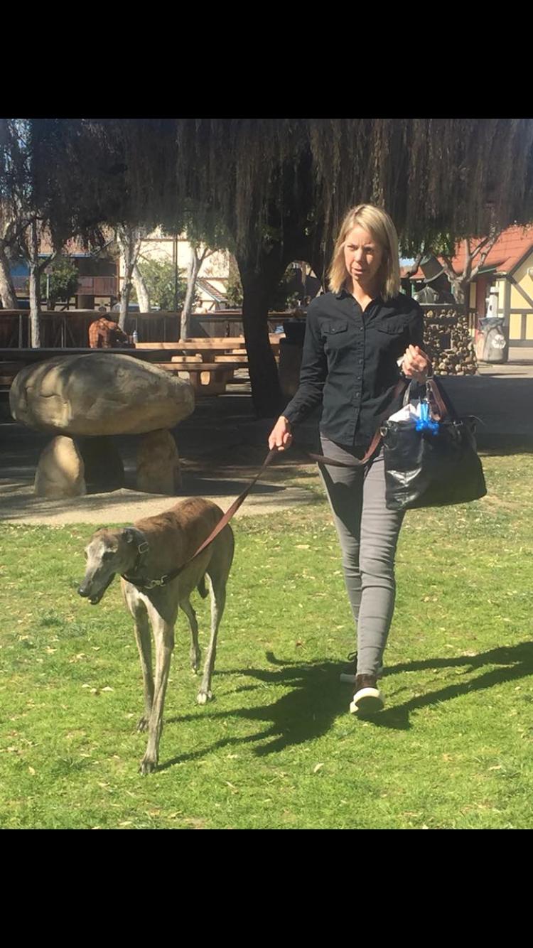 The Solvang Greyhound Gathering