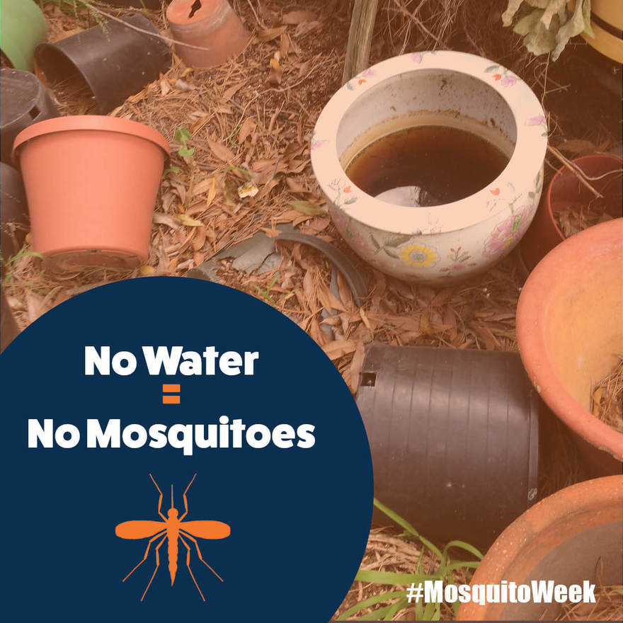 It's Mosquito Awareness Week in Bakersfield!3