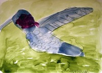 watercolor painting and sketch of a blue and red humming bird with green background