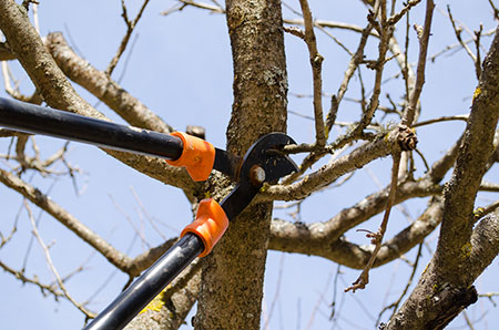 Santa Barbara Tree Pruning Service
