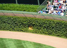 Wrigley Field Ivy: Bigger Than Banks, Williams and Santo Combined