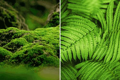 briofitas e pteridofitas